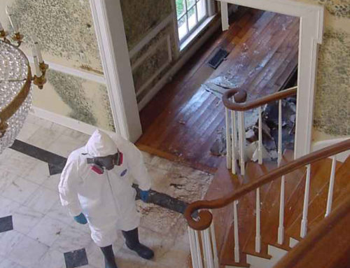 How to Avoid Mould Growth in Your Home